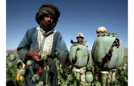 harvesting-opium_1396912i1